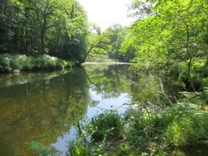 The Dart upstream at Hembury Woods